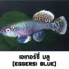 ไข่ปลาคิลลี่ สายพันธุ์ Nothobranchius Eggersi Blue (Egg Blue) จำนวน 30 ฟอง