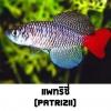 ไข่ปลาคิลลี่ สายพันธุ์ Nothobranchius patrizii (Patrizii Jenalle) จำนวน 50 ฟอง