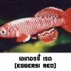 ไข่ปลาคิลลี่ สายพันธุ์ Nothobranchius eggersi red (Eggersi Rufiji river camp TAN95/7) จำนวน 50 ฟอง