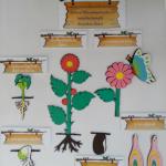 วัฏจักรของพืช(1แพ็คมี14ชิ้น)โฟมยางEVA