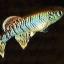 ไข่ปลาคิลลี่สายพันธุ์ Nothobranchius eggersi blue(Eggersi Blue Rufiji river camp TAN95) จำนวน 50 ฟอง thumbnail 1