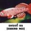 ไข่ปลาคิลลี่ สายพันธุ์ Nothobranchius eggersi red (Eggersi Rufiji river camp TAN95/7) จำนวน 50 ฟอง thumbnail 1