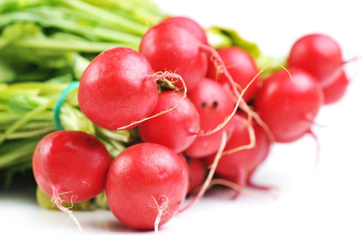 แรดิช Radish / หัวผักกาดแดง / 50 เมล็ด