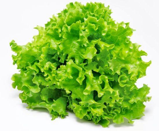 ผักกาดหอม ซีเฟรช หรือผักสลัด / 500 เมล็ด