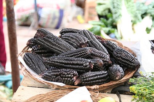 ข้าวโพดสีดำ - Black Glutinous Corn / 20 เมล็ด
