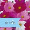 ดาวกระจาย เซนเซชั่น มิกซ์ (ซองใหญ่) #1 / 10 กรัม