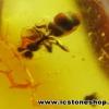 ▽อำพัน บอลติกขัดมันมีแมลงภายใน Genuine Baltic Amber (0.725ct.)