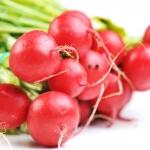 แรดิช Radish / หัวผักกาดแดง / 100 เมล็ด