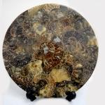 กลุ่มฟอสซิล แอมโมไนต์มาดากัสการ์ ขนาดใหญ่(Ammonite) (1.1Kg)