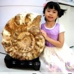 ฟอสซิล แอมโมไนต์มาดากัสการ์ ลายเฟิร์นขนาดใหญ่(Ammonite) (43.5Kg)