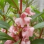 เทียนซ้อน (ซองใหญ่) แคนดี้พิ้งค์ สีชมพูอ่อน balsam candy pink / 10 กรัม thumbnail 1