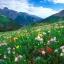 ดอกโคลัมไบน์ มิ๊กซ์ Columbine Flower Mix / 25 เมล็ด thumbnail 4